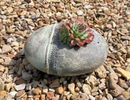 (PO8) Oval garden pod